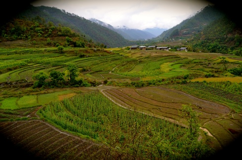 the green lush valleys of Punakha