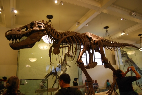 T-Rex at the Museum of Natural History