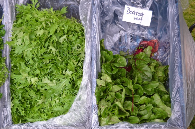Fresh herbs at Margaret River Farmers' Market