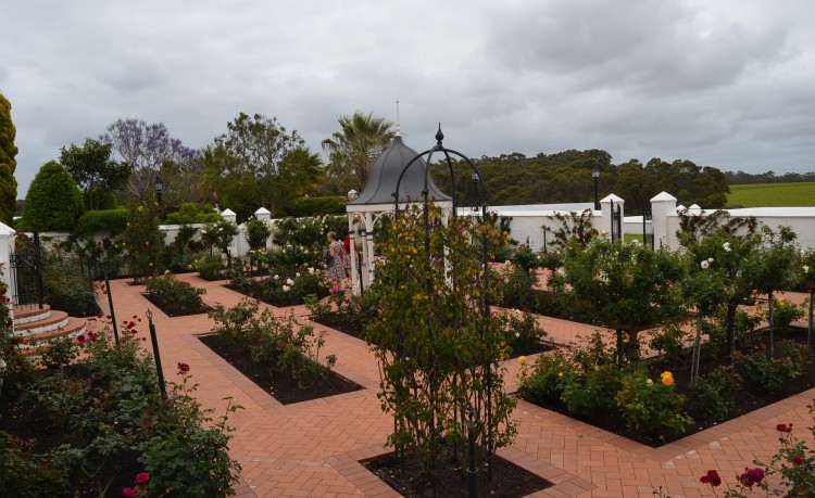 The rose gardens at Voyager Estate